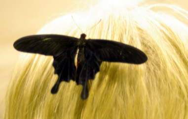 butterflies-saskatoon-gardenscape-1817013-o
